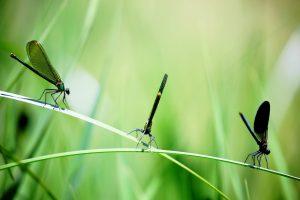 Cum ne protejam de insecte pe timp de vara?